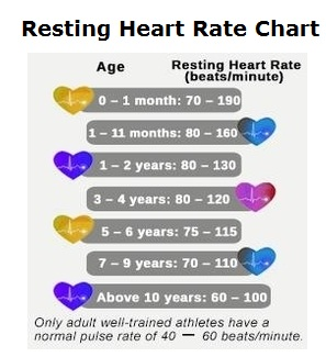 Resting heart rate chart graph diagram ccuart Image collections