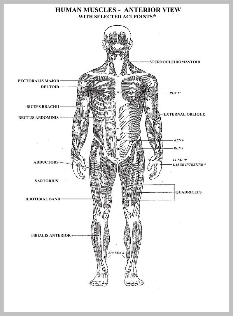 blank diagram of the human body