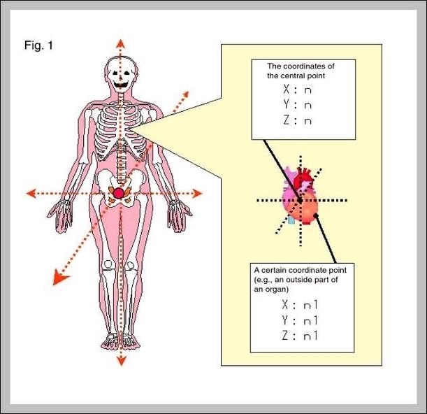 body organs map | Graph Diagram