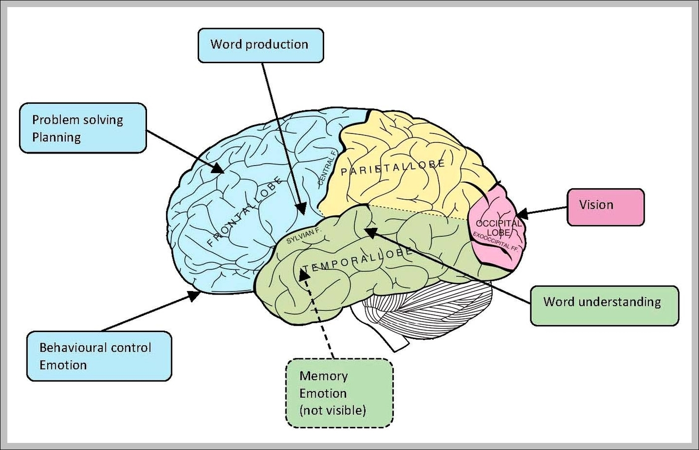 Diagram Of Memory And Brain Functions - Wiring Diagram For Light ...