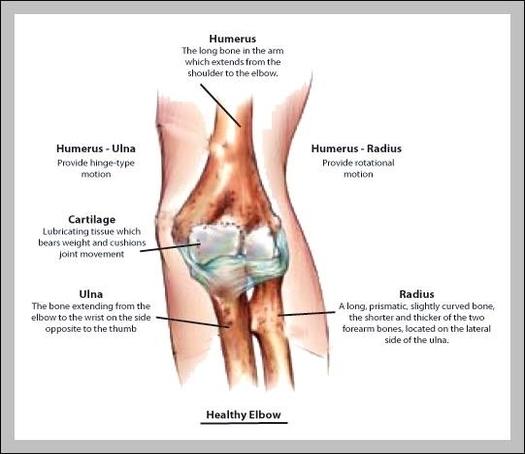Elbow Anatomy Diagram Graph Diagram