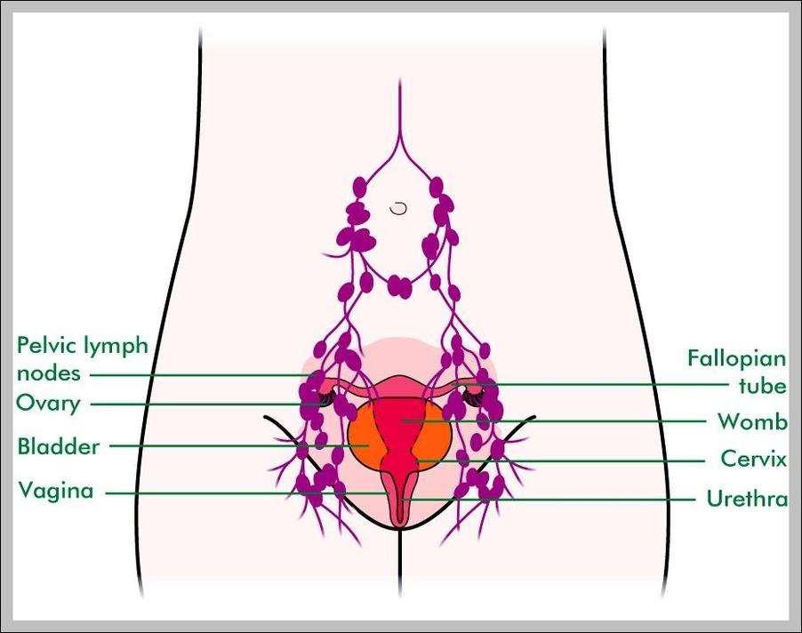 Female Groin Lymph Nodes Diagram Graph Diagram