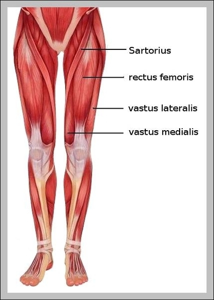 Female graph diagram female muscular anatomy diagram chart diagrams and charts with labels this diagram depicts female muscular anatomy ccuart Images