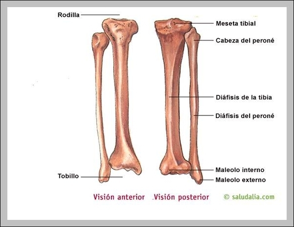 Anatomy Graph Diagram Page 50