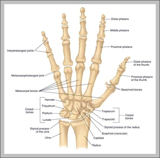 Hand Joints Graph Diagram