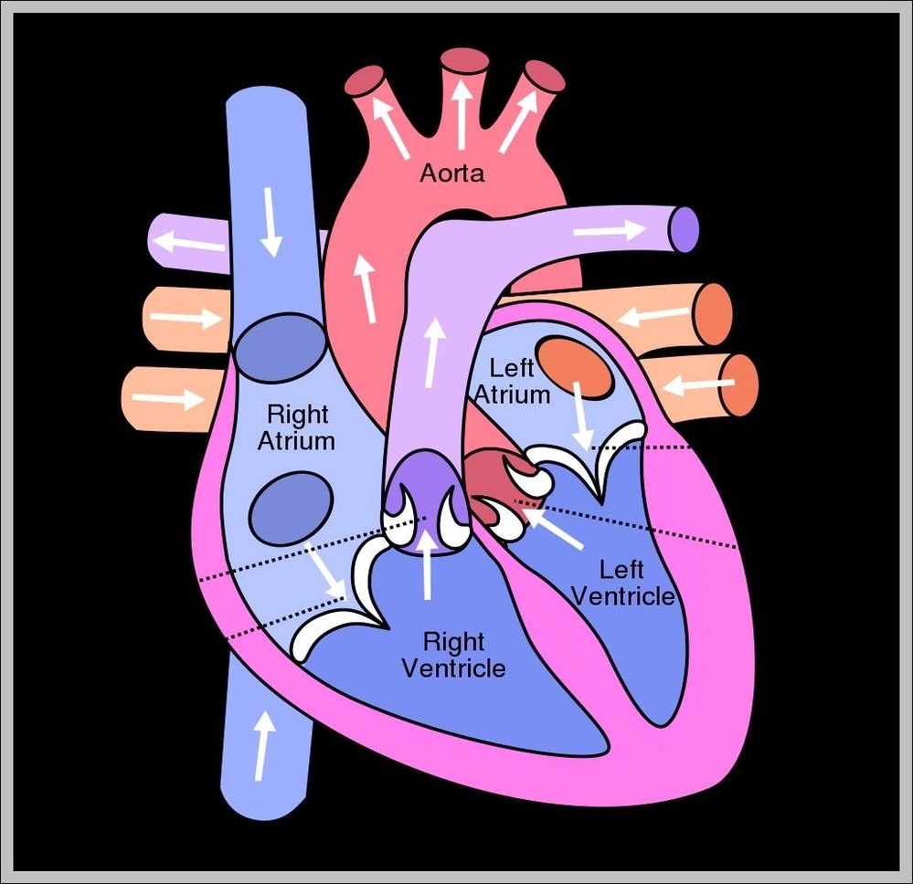 Heart diagram graph diagram heart structure diagram diagram chart diagrams and charts with labels this diagram depicts heart structure diagram ccuart Image collections