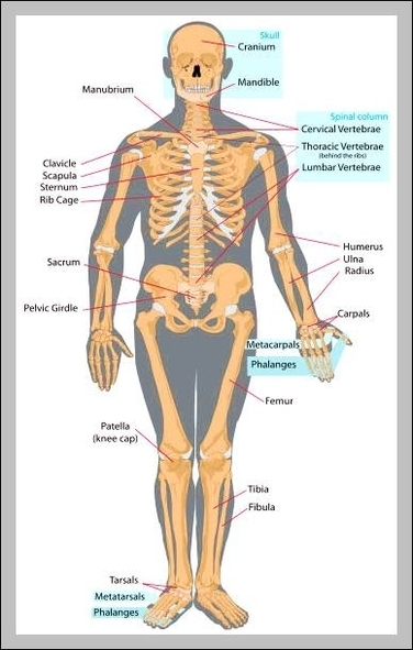 Graph diagram graphs diagrams charts page 43 human anatomy interactive diagram chart diagrams and charts with labels this diagram depicts human anatomy interactive ccuart Image collections