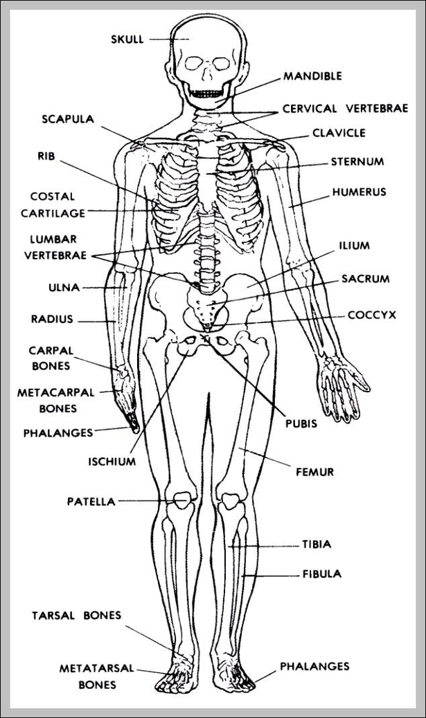 Human Anatomy Study Guides Graph Diagram