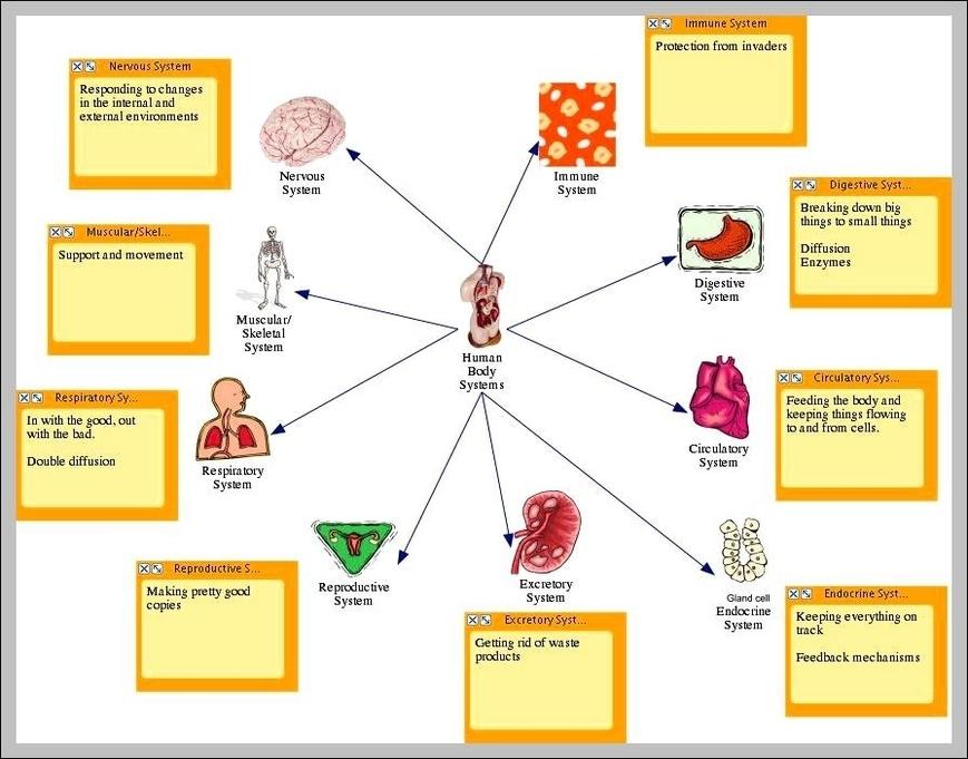 Human Body Systems Diagram Graph Diagram