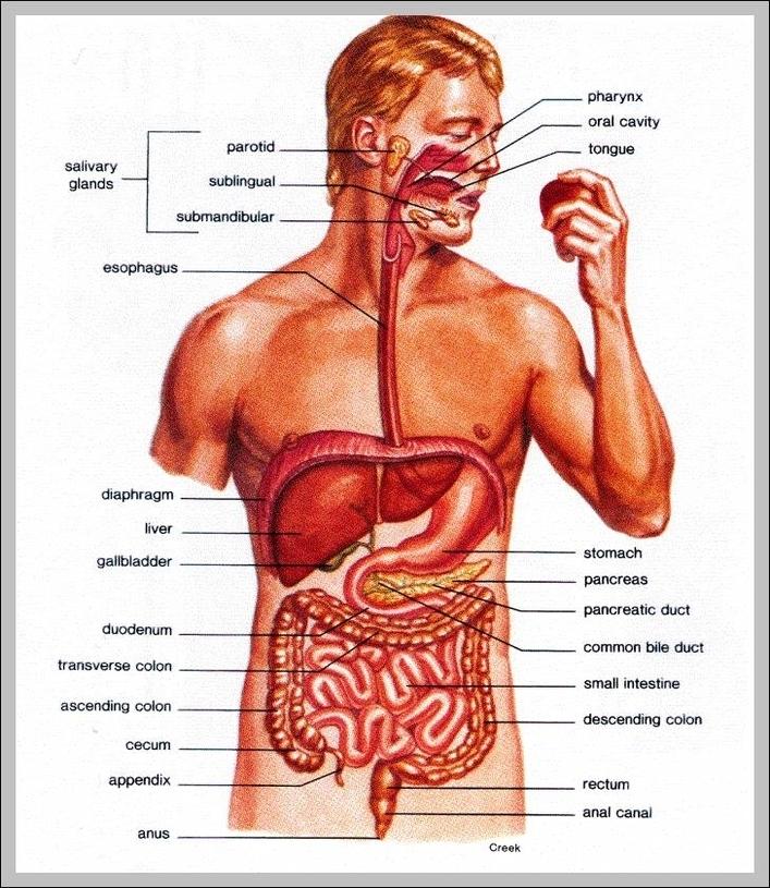 Inside body parts | Graph Diagram
