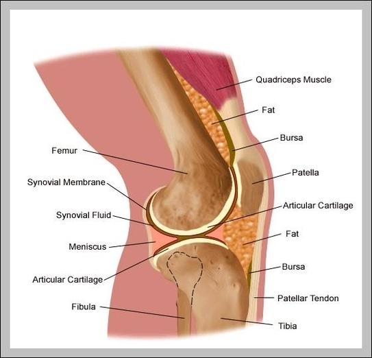Knee tendon diagram graph diagram knee tendon diagram ccuart Images