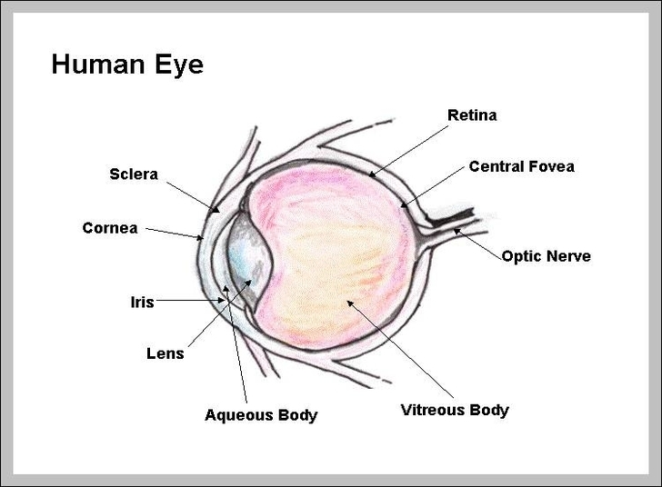 Eye diagram labels complete wiring diagrams graph diagram graphs diagrams charts page 32 rh graphdiagram com eye diagram without labels human eye ccuart Images