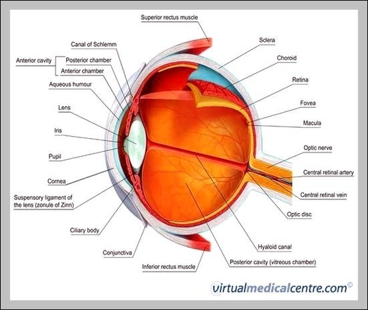 Labelled eye diagram graph diagram labelled eye diagram ccuart Image collections