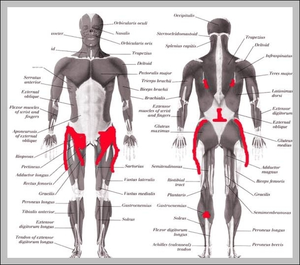 Lower back hip anatomy | Graph Diagram