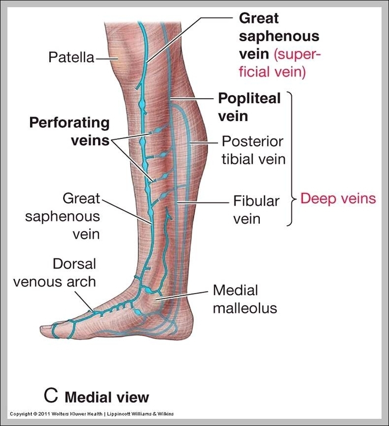 lymph nodes in legs diagram diagram - chart - diagrams and charts with  labels  this diagram depicts lymph nodes in legs diagram