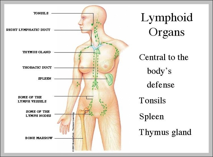 Lymphatic System Animation Graph Diagram