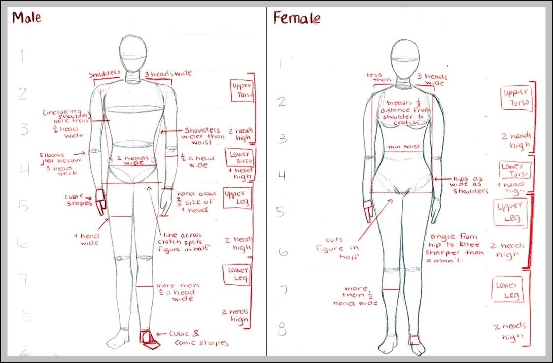 male anatomy | Graph Diagram