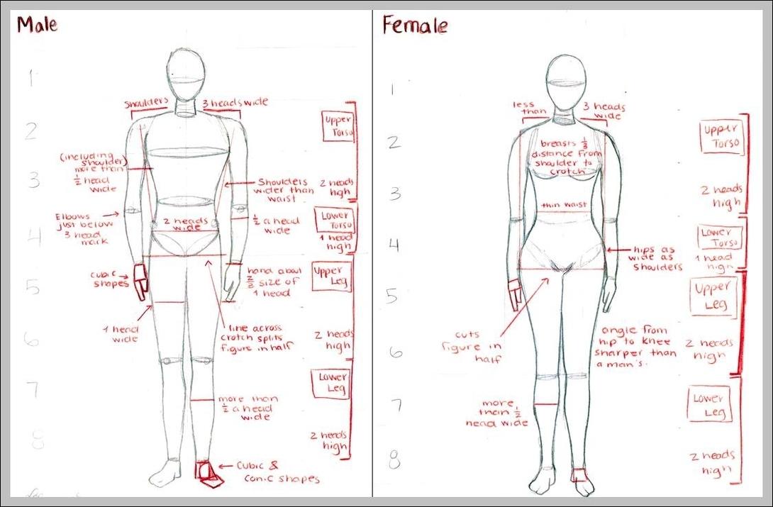 male chart | Graph Diagram
