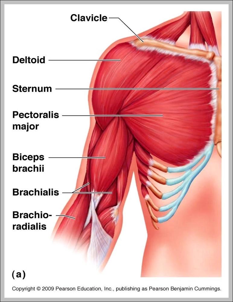 Anatomy Graph Diagram Page 27