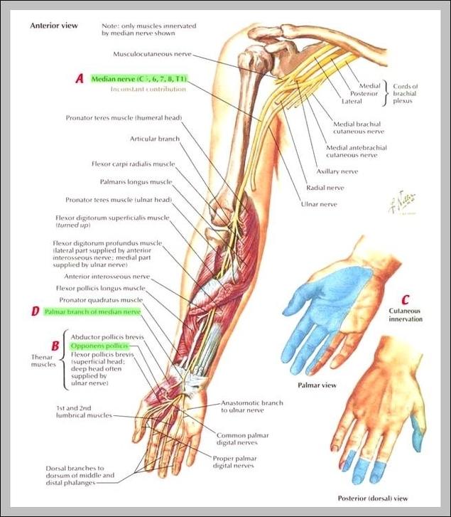Nerve Graph Diagram Page 2