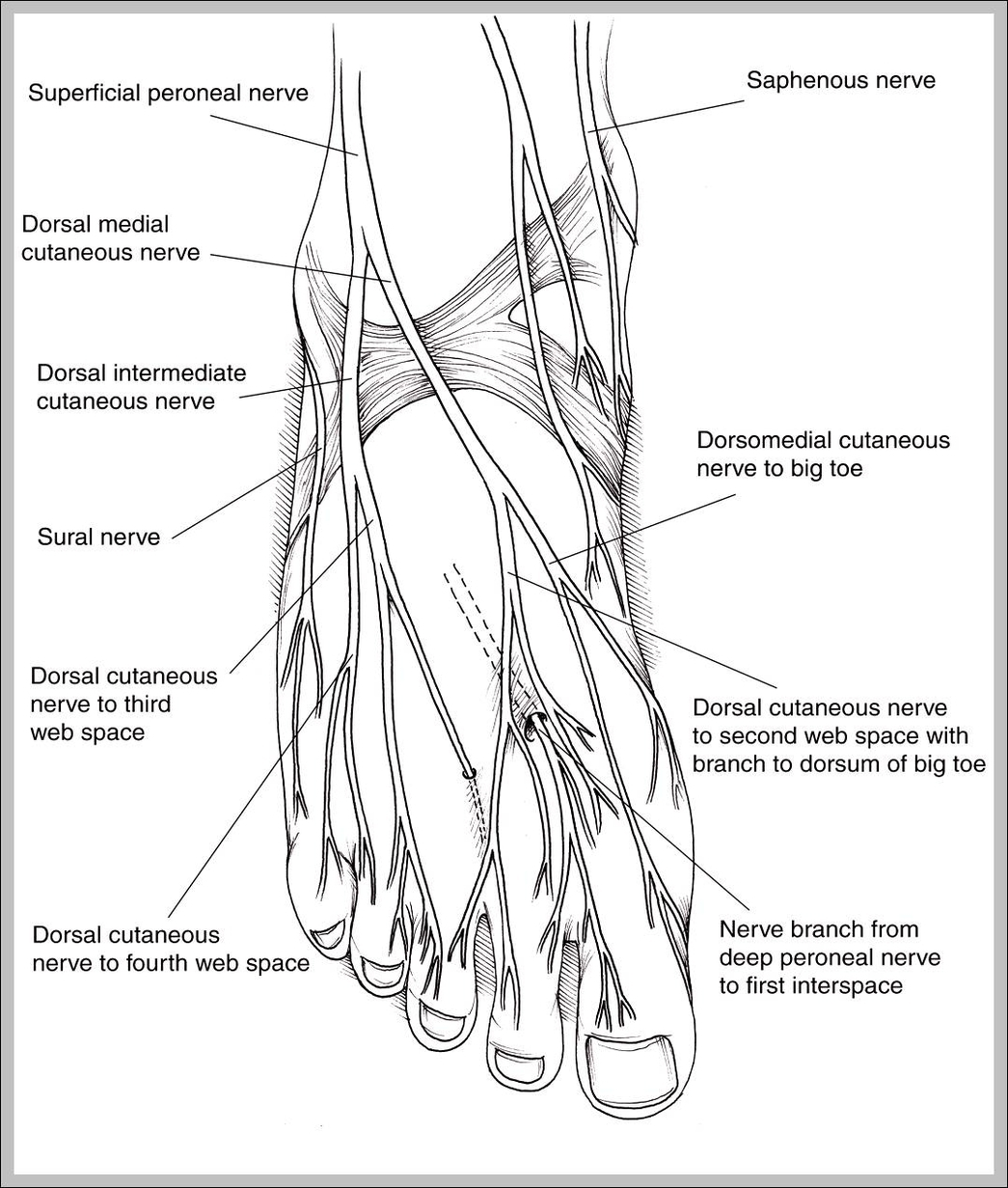 Human Nervous System Graph Diagram