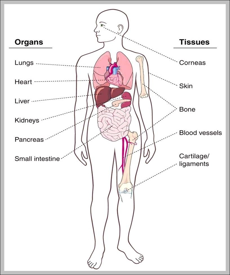 Organ location in human body | Graph Diagram