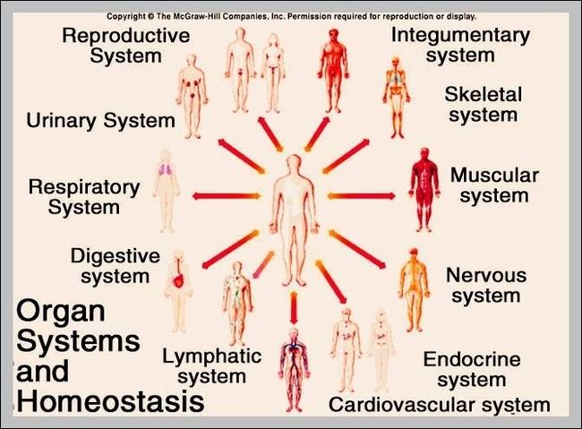 organs | Graph Diagram