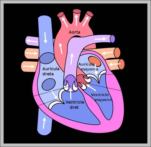 Heart With Labels Graph Diagram