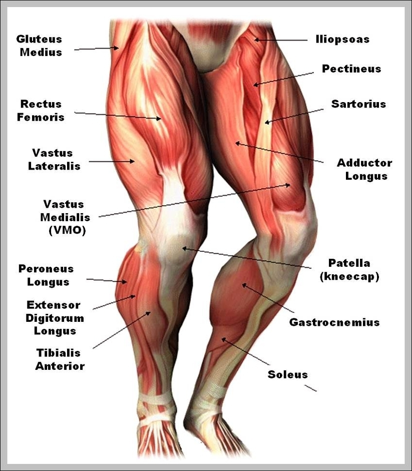 muscle chart | Graph Diagram | Page 2