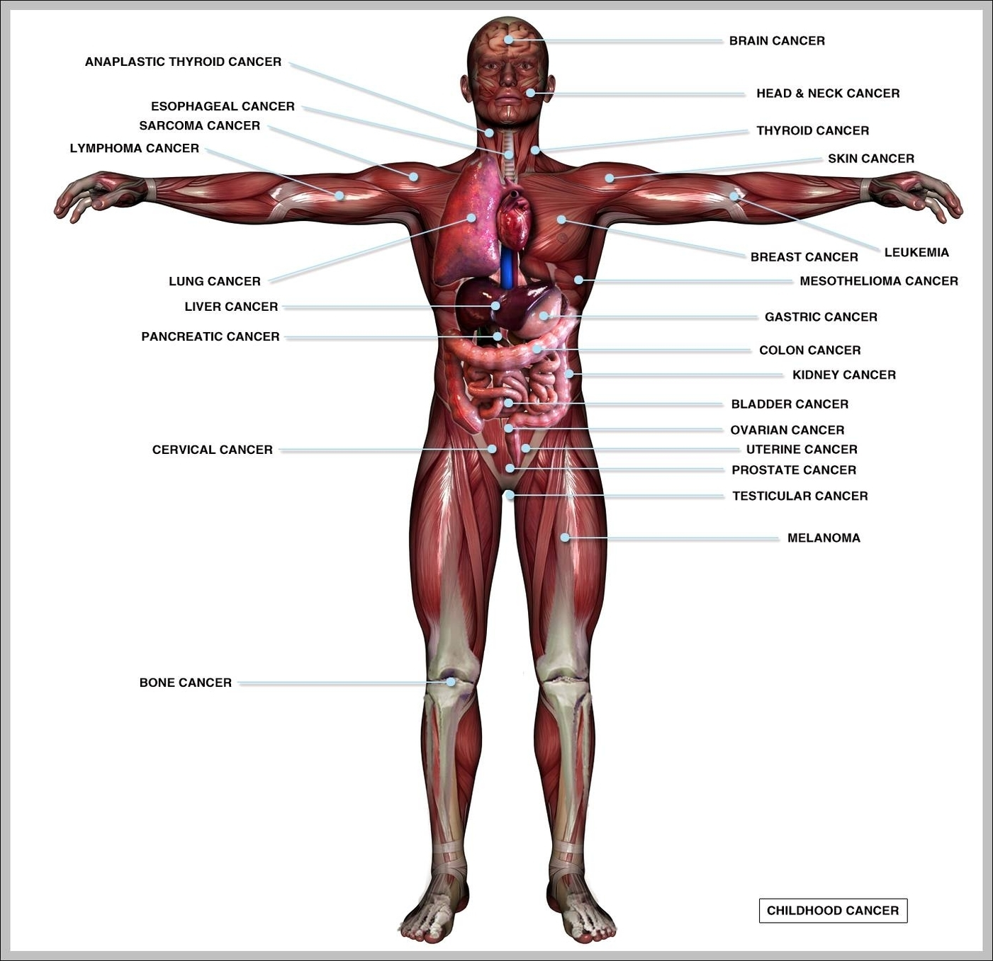 Body Organs Graph Diagram