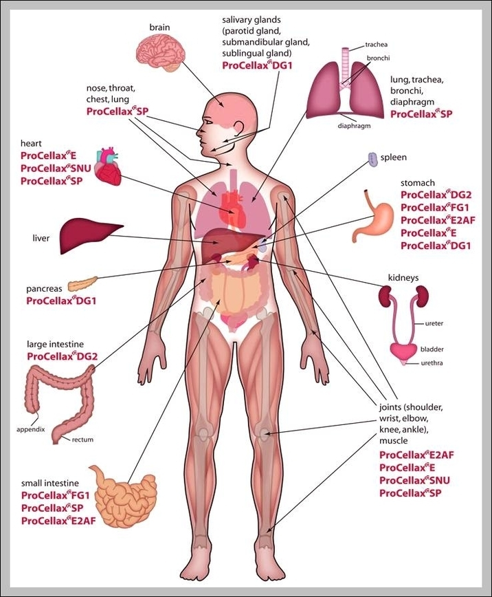 Picture Of The Human Body And Organs Graph Diagram