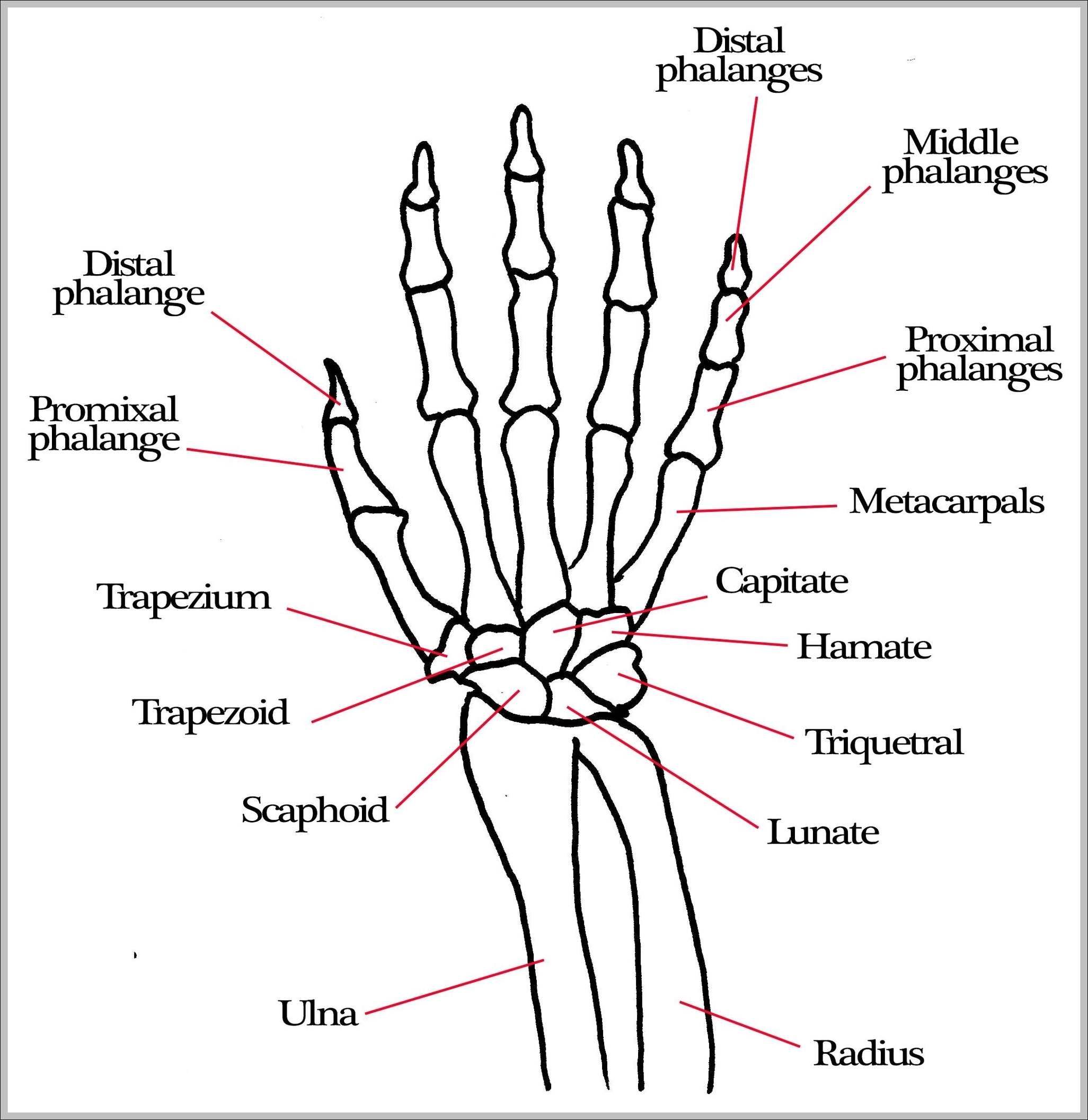 bone diagram of the hand - wiring schematic data