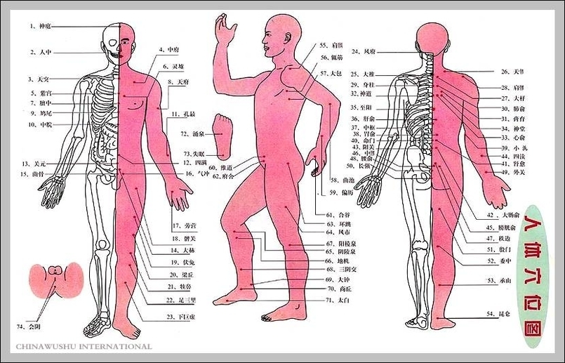 Pressure points human anatomy | Graph Diagram