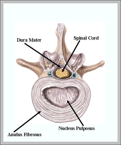 purpose of spleen