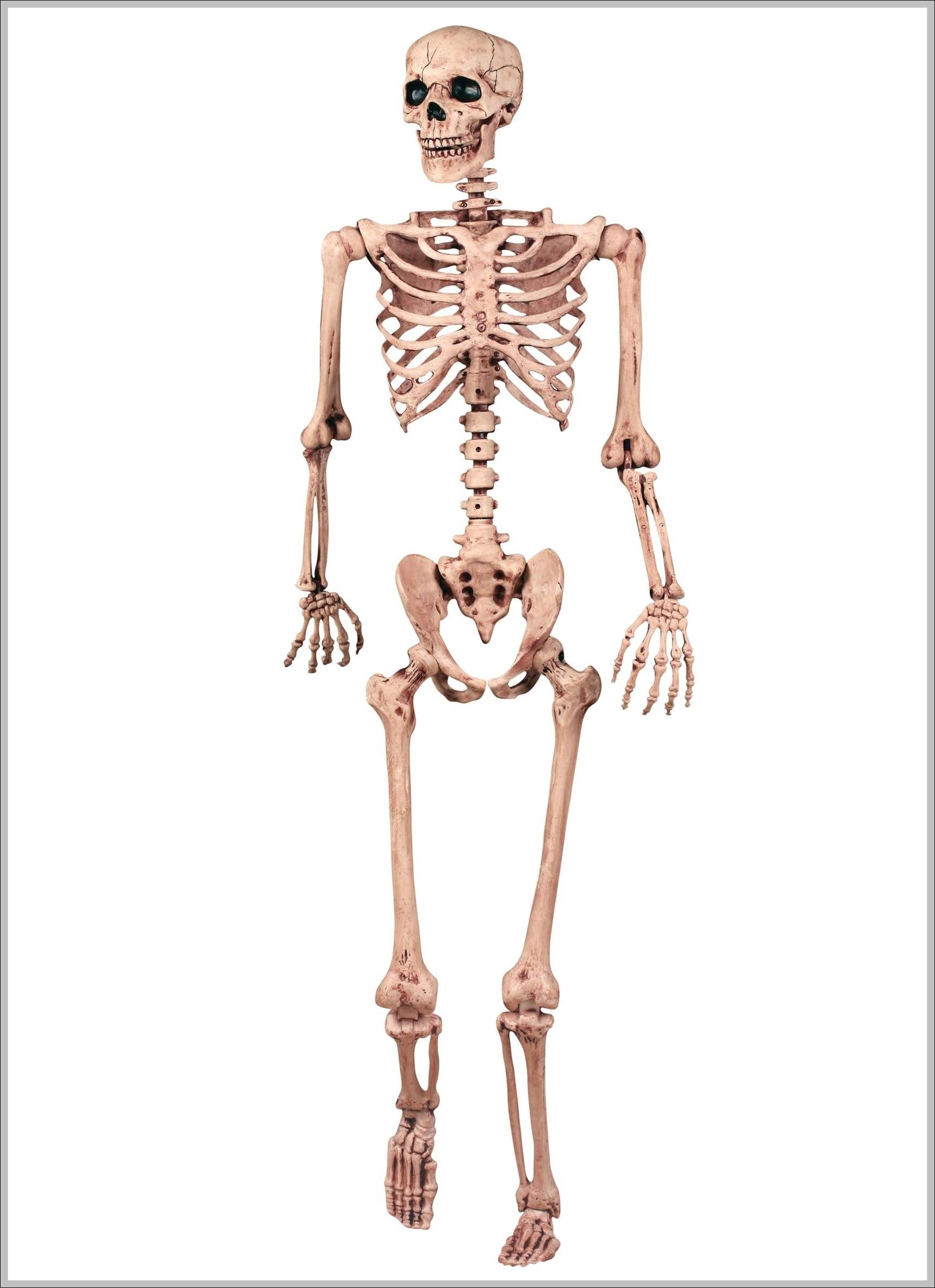 Human Skeleton Anatomy Graph Diagram