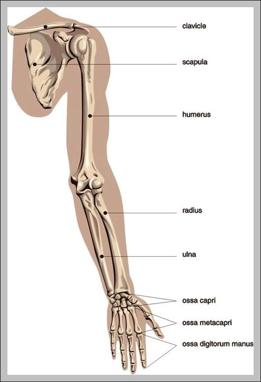 Arm Graph Diagram