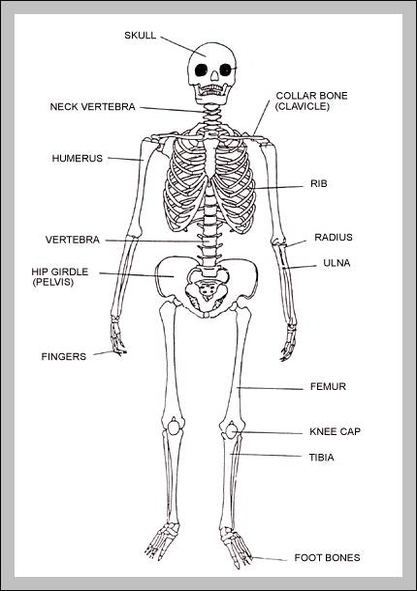 body organs | Graph Diagram