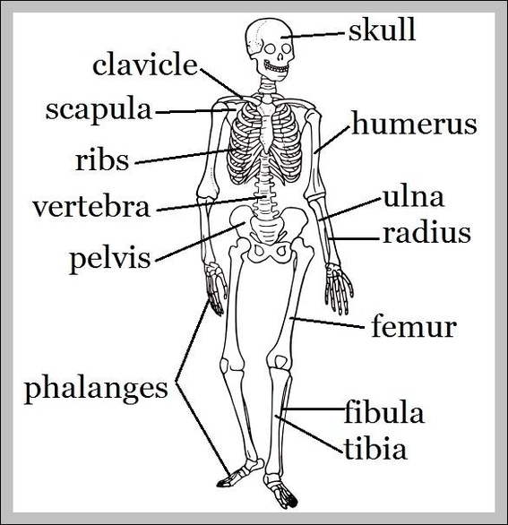 Bones Chart Graph Diagram