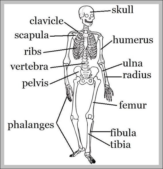 Skeleton names | Graph Diagram
