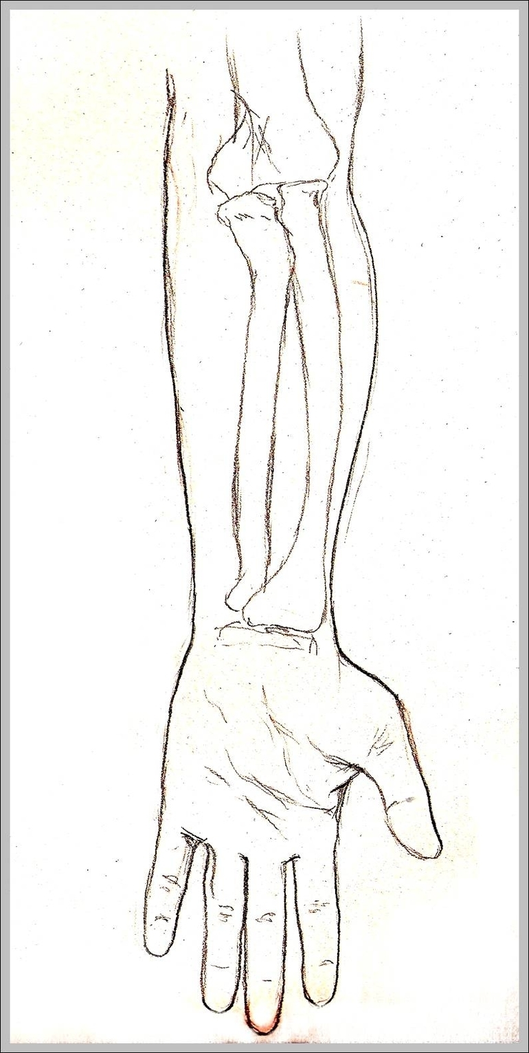 Supination of hand | Graph Diagram
