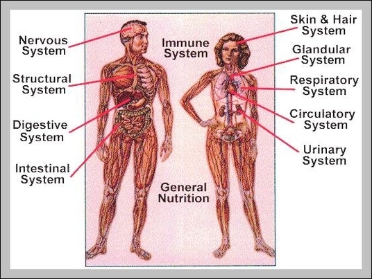Body System Diagram on parts nervous system
