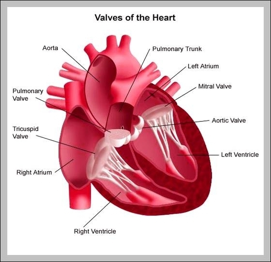 Heart chart graph diagram the function of the heart diagram chart diagrams and charts with labels this diagram depicts the function of the heart ccuart Image collections