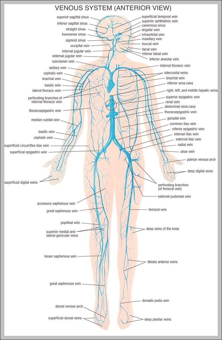 Human body diagram graph diagram vein system of the human body 7441195 diagram chart diagrams and charts with labels this diagram depicts vein system of the human body 7441195 ccuart Gallery
